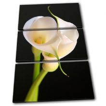 Calla Lily Flowers Floral - 13-1209(00B)-TR32-PO
